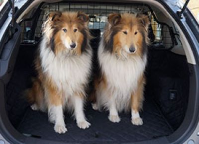 Collie Dog Boot Liner